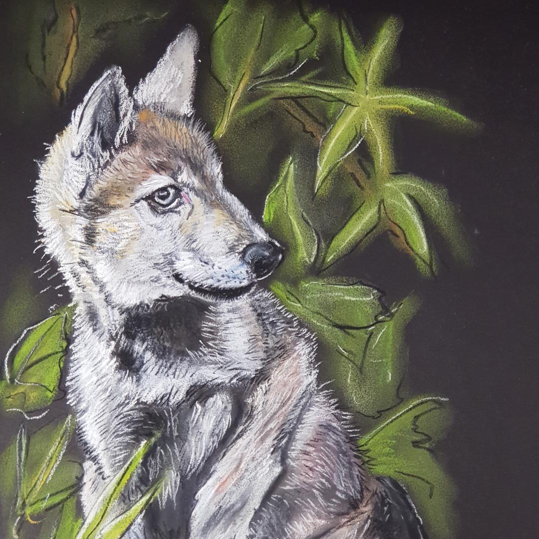 Junger Steppenwolf von Michael Tasios